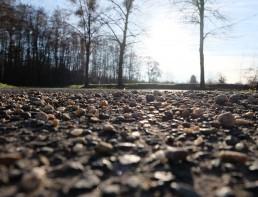 Sonne bescheint Steine durch Bäume